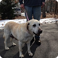 Adopt A Pet :: Blanche - Mt Gretna, PA