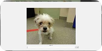 Terrier (Unknown Type, Medium) Mix Dog for adoption in Maquoketa, Iowa - Macy
