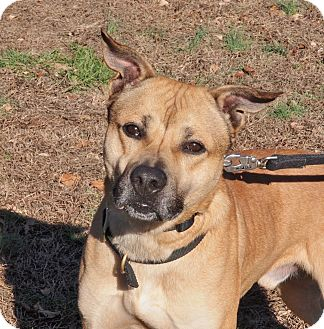 German Shepherd Dog Mix Dog for adoption in Ocean View, New Jersey - Tyson