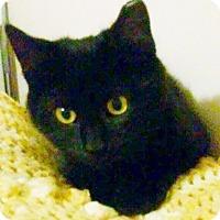 Adopt A Pet :: Ridley - North Highlands, CA