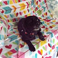 Adopt A Pet :: Mitzi -Adopted! - Kannapolis, NC