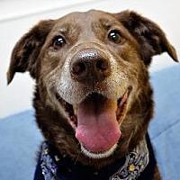 Adopt A Pet :: COCO - Little Rock, AR