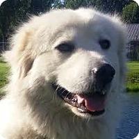 Adopt A Pet :: Theodora - Silver Spring, MD