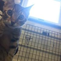 Adopt A Pet :: Cato - Bedford, IN