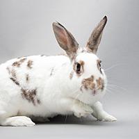 Adopt A Pet :: Annika - Los Angeles, CA
