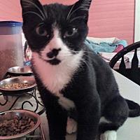 Adopt A Pet :: Felicity - Morganton, NC