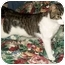 Photo 2 - Domestic Shorthair Cat for adoption in Amelia, Ohio - Romeo