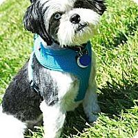 Adopt A Pet :: Frankie - Rancho Mirage, CA