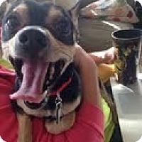 Adopt A Pet :: Bacon - Chicago, IL