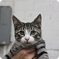 Adopt A Pet :: collin - Santa Monica, CA