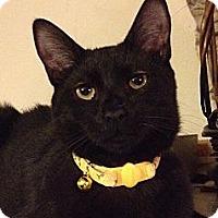 Adopt A Pet :: Shakespeare - Santa Rosa, CA