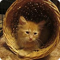 Adopt A Pet :: HYATT - Acme, PA