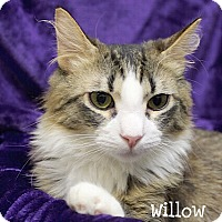 Adopt A Pet :: Willow - Foothill Ranch, CA
