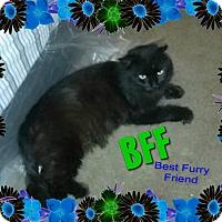 Adopt A Pet :: Bear - FIV+ MegaMellow 25.00 - Rochester, NY