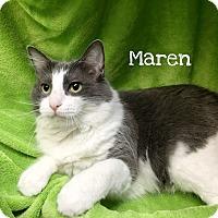 Adopt A Pet :: Maren - Foothill Ranch, CA