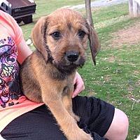 Adopt A Pet :: Tallie - Providence, RI