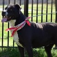 Adopt A Pet :: Chaney - Princeton, KY