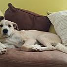 Adopt A Pet :: Camo