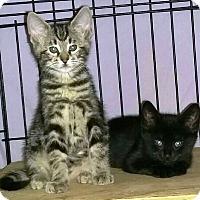 Adopt A Pet :: Maxwell - Harrisburg, NC