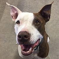 Adopt A Pet :: Rex - Lubbock, TX