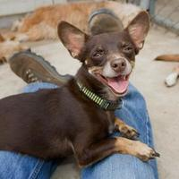Terrier (Unknown Type, Small) Mix Dog for adoption in Fresno, California - Ernie