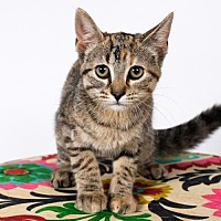 Adopt A Pet :: Ruby - St. Louis Park, MN