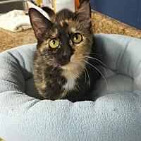 Adopt A Pet :: Olla - Wilmington, OH