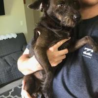 Adopt A Pet :: Frankie (bonded with Frankie) - Davie, FL