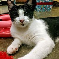 Adopt A Pet :: Felix - Madisonville, LA