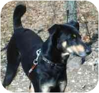 Doberman Pinscher Mix Dog for adoption in Osseo, Minnesota - Dobie