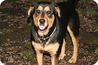 Rottweiler Mix Dog for adoption in Linton, Indiana - Jasmine