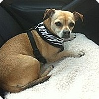 Adopt A Pet :: Daisy - Hamilton, ON