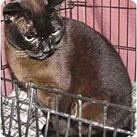 Adopt A Pet :: Freida - Davis, CA