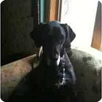 Adopt A Pet :: Dutchess - Inver Grove Heights, MN