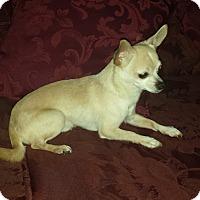 Adopt A Pet :: AYDEN - Wilmington, NC