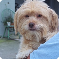 Adopt A Pet :: SAILOR - Odessa, FL