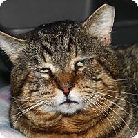 Adopt A Pet :: Spike - North Branford, CT