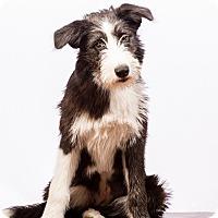 Adopt A Pet :: Charlotte - MEET ME - Norwalk, CT