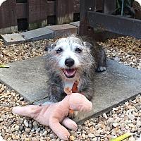 Adopt A Pet :: Zip - Davie, FL