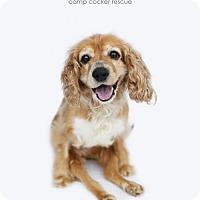 Adopt A Pet :: Violet - Sherman Oaks, CA