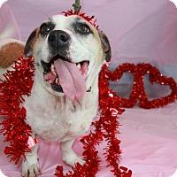 Adopt A Pet :: Sampson - Erwin, TN