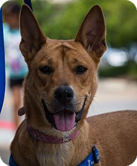 Shepherd (Unknown Type) Mix Dog for adoption in Hillside, Illinois - Sugarbee