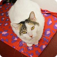 Adopt A Pet :: Rosita - Springfield, IL