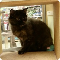 Adopt A Pet :: Abby - Warrenton, MO