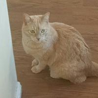 Adopt A Pet :: Jax - Ogden, UT