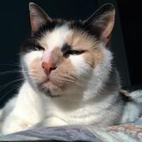 Adopt A Pet :: Winter - Fairfax, VA