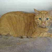 Adopt A Pet :: *PUMPKIN - Norco, CA