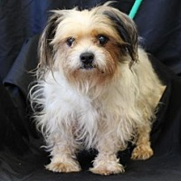 Adopt A Pet :: Winifred - Chester Springs, PA