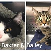 Adopt A Pet :: Baxter - Foster / 2017 - Maumelle, AR
