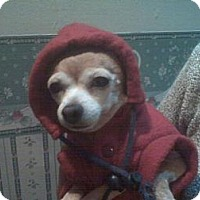 Adopt A Pet :: Chicklett - Southampton, PA